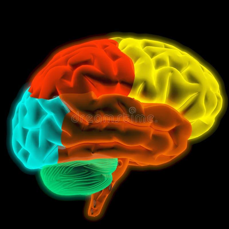 脑子 库存例证