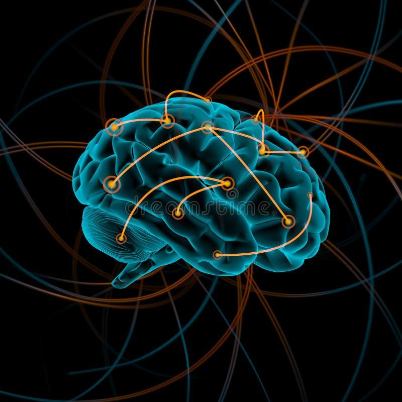 脑子bw颜色四例证差异 免版税库存照片