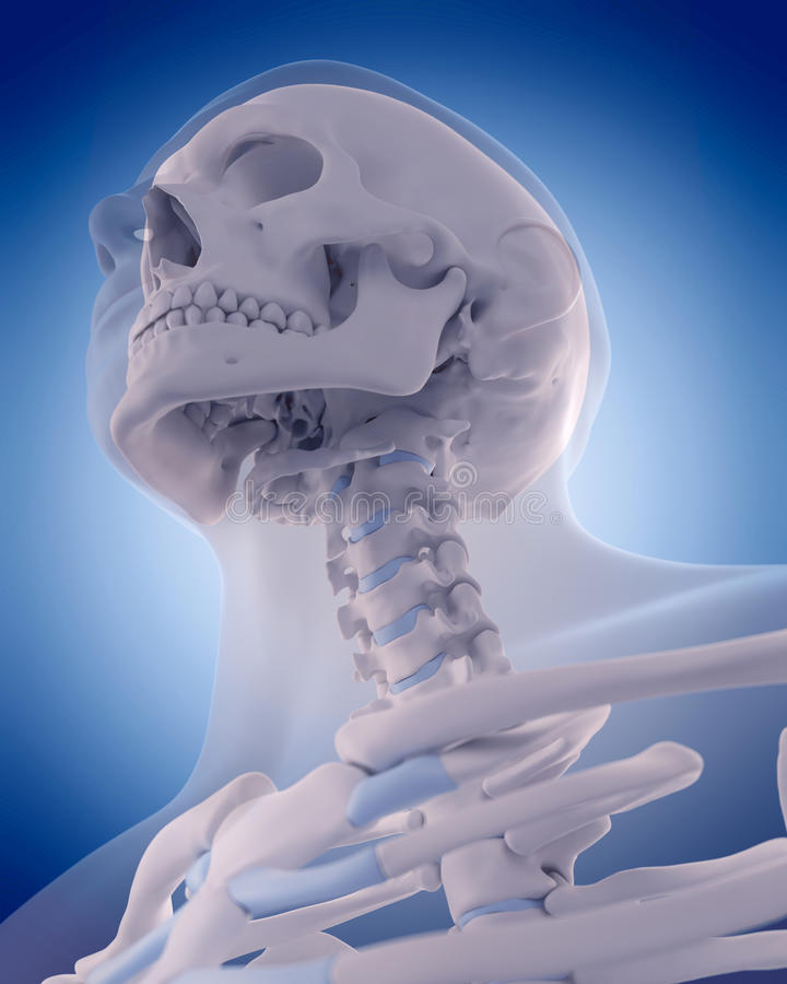 脖子的骨头 向量例证