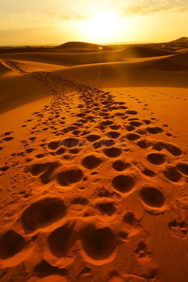 脚印在摩洛哥` s尔格沙漠沙丘的独峰驼段落以后忘记了  免版税库存图片