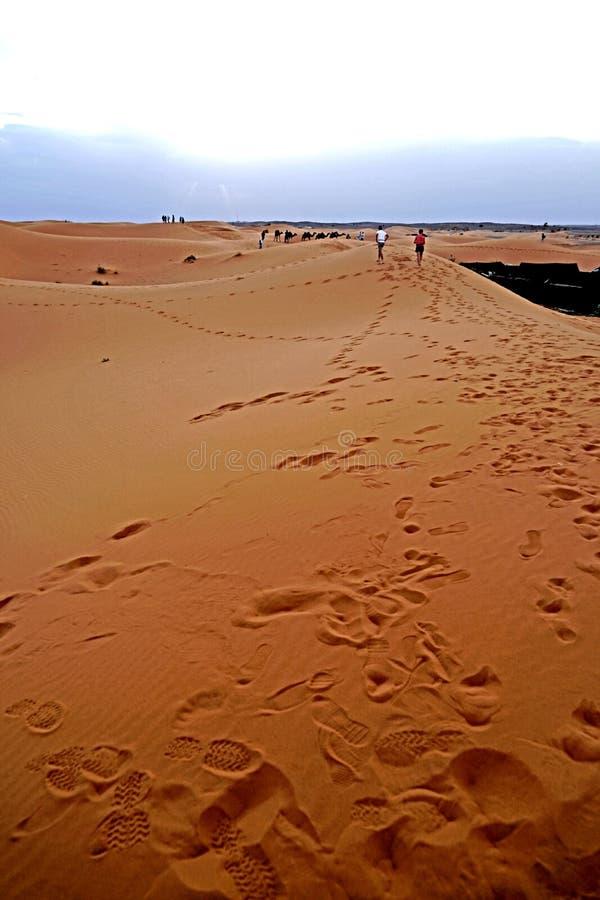 脚印在摩洛哥` s尔格沙漠沙丘的独峰驼段落以后忘记了  库存图片