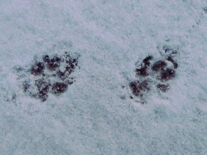 脚印在雪打扫灰尘清除  库存图片