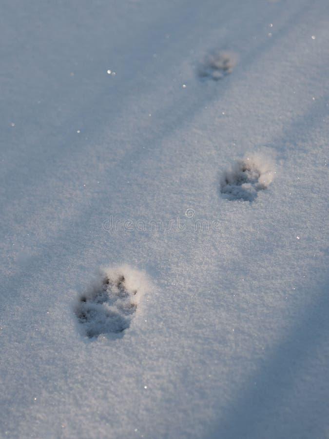 脚印在雪的自然动物轨道 免版税库存照片