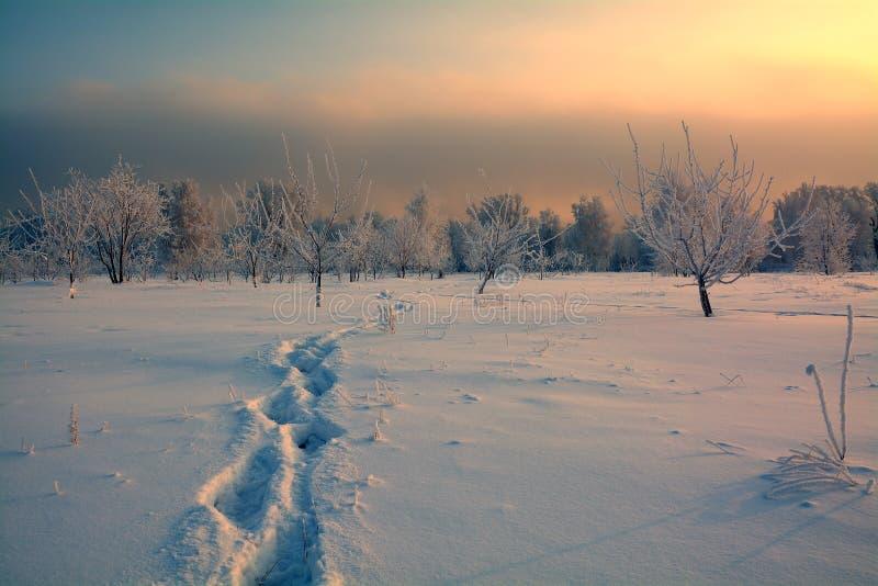 脚印雪时间冬天 库存图片
