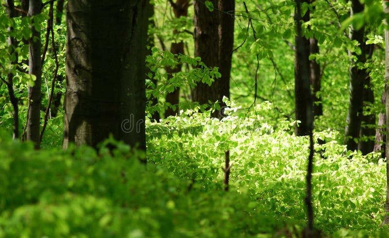 脚森林 库存照片