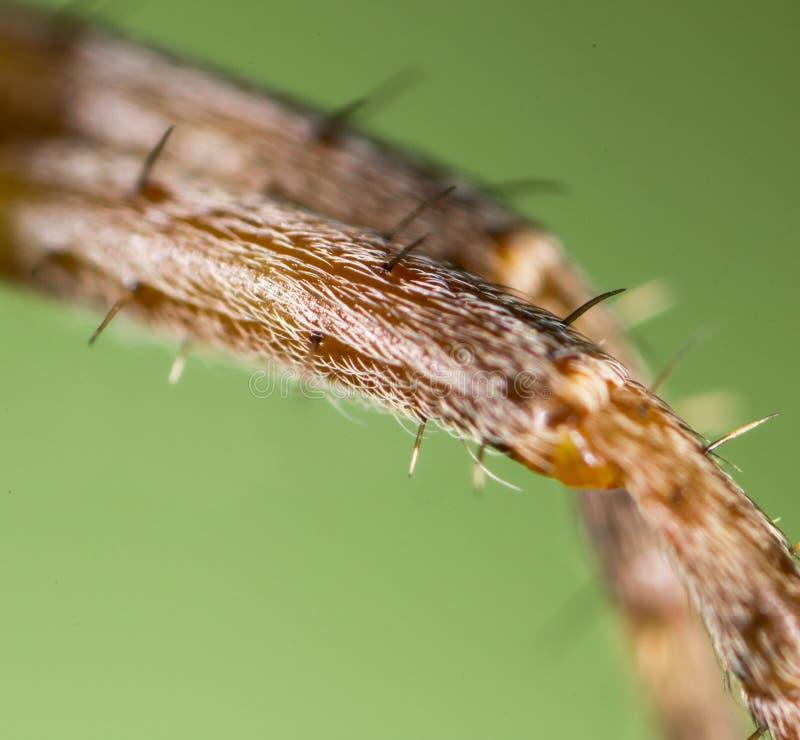 脚蜘蛛 2009朵超级花宏观的夏天 免版税库存照片