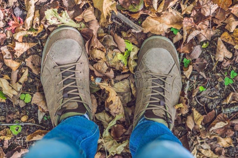 脚走在秋天的运动鞋在公园离开与秋天季节自然在背景生活方式时尚时髦样式 图库摄影