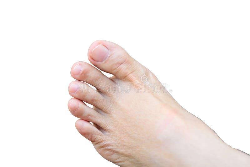 脚趾 免版税图库摄影
