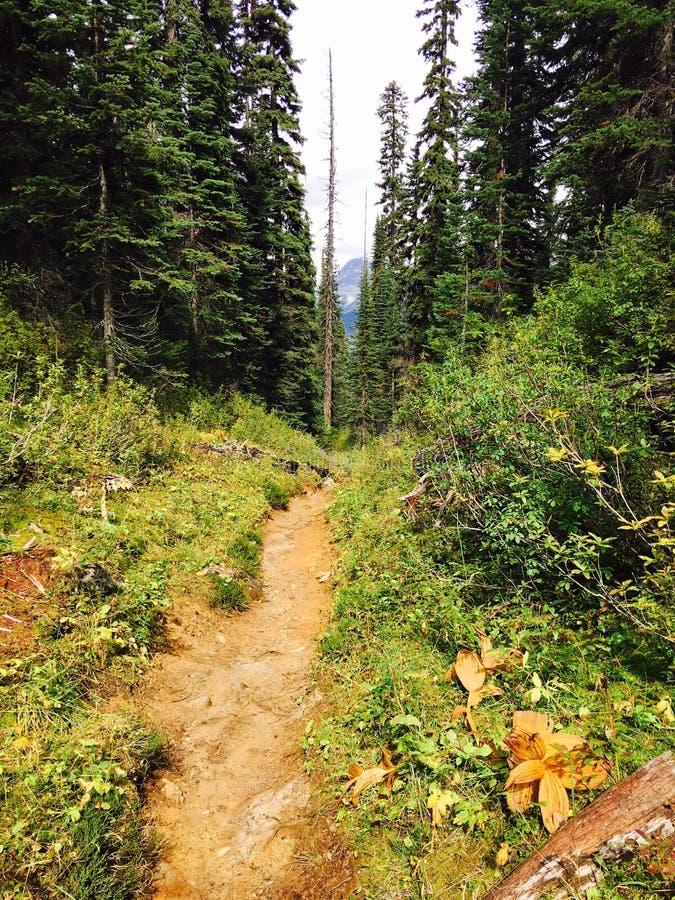 脚道路在森林里在落矶山在加拿大 免版税库存照片