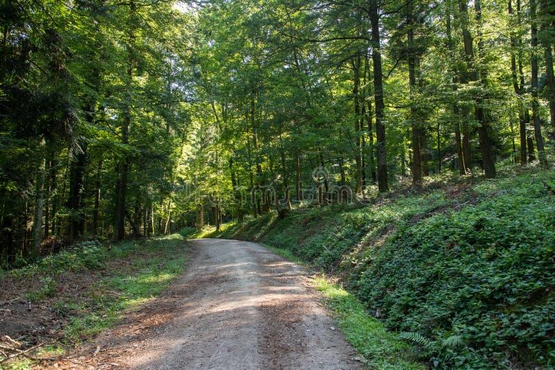 脚道路在badenweiler附近的黑森林里 库存图片