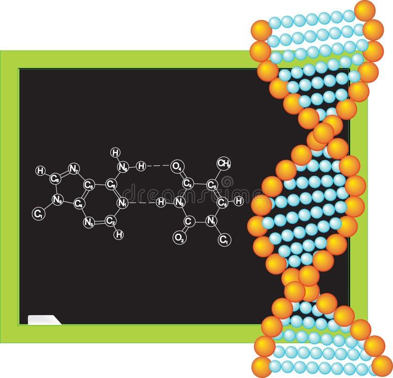脱氧核糖核酸例证向量 库存例证