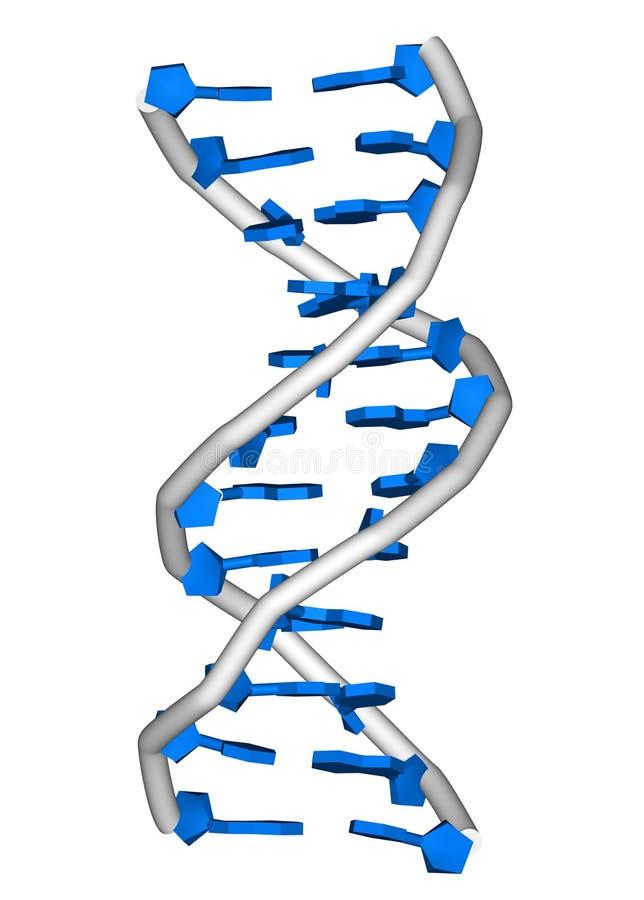 脱氧核糖核酸分子 皇族释放例证
