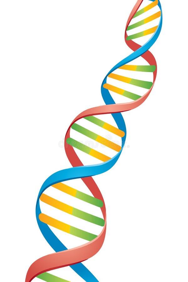 脱氧核糖核酸双重螺旋子线 皇族释放例证