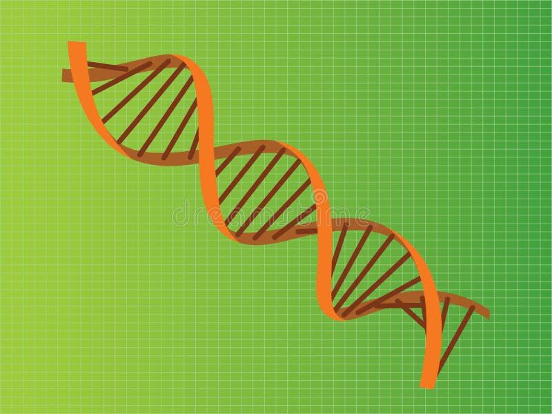 脱氧核糖核酸子线桔子例证 向量例证