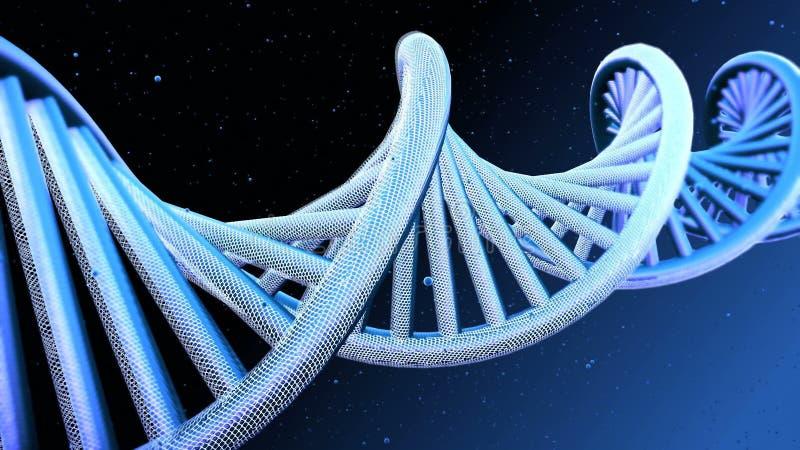 脱氧核糖核酸子线模型  免版税库存图片