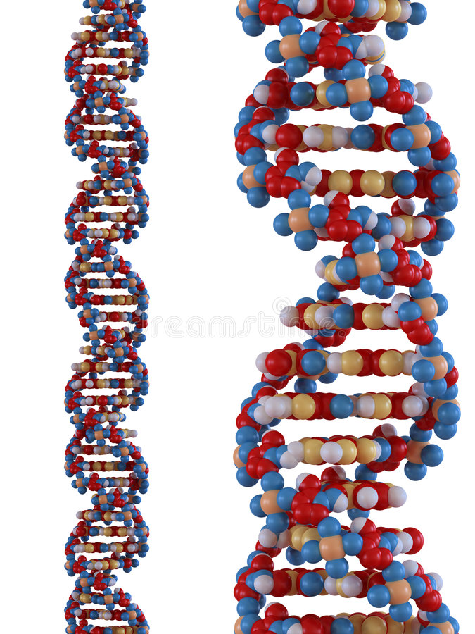 脱氧核糖核酸子线 皇族释放例证