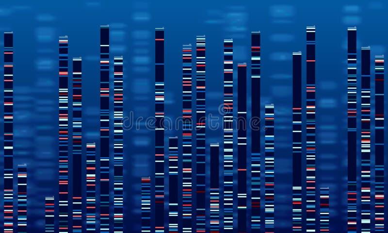 脱氧核糖核酸数据图 医学测试图表、抽象染色体序列图表和染色体组的地图传染媒介例证 向量例证