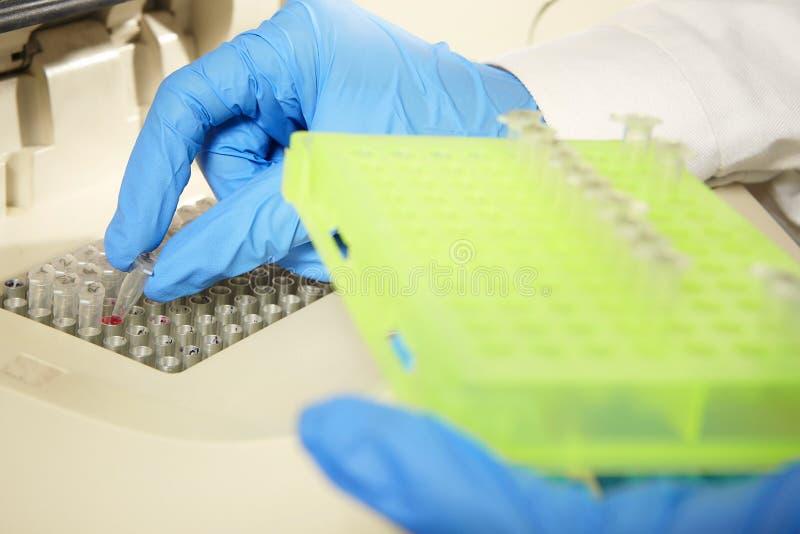脱氧核糖核酸样品为PCR过程做准备 免版税库存图片