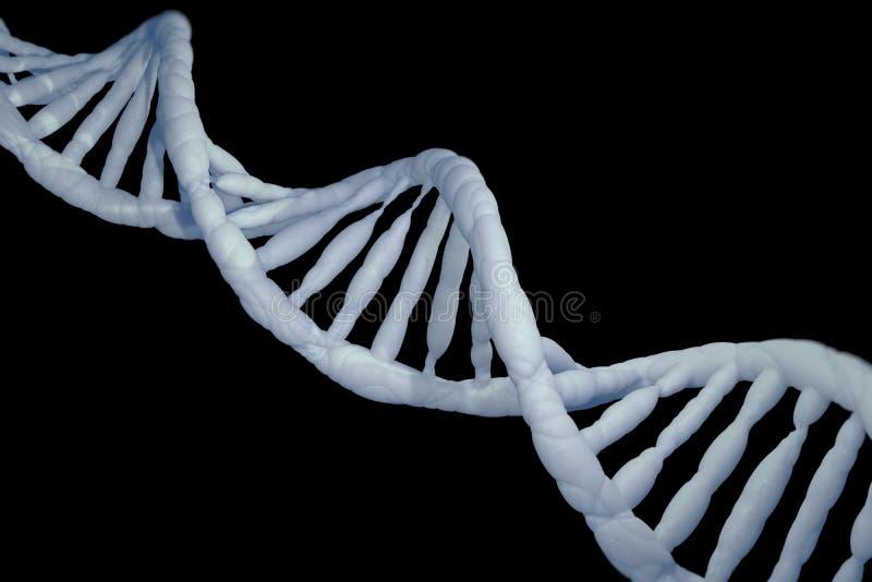 脱氧核糖核酸模型研究概念, 3D翻译 库存例证