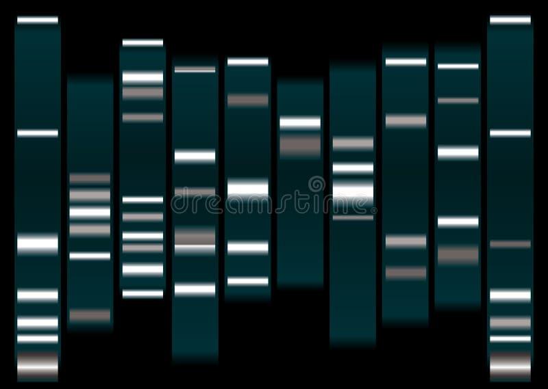 脱氧核糖核酸白色 库存例证