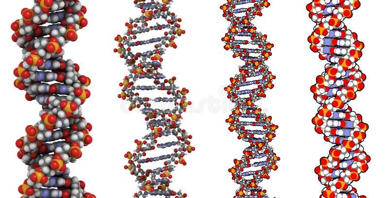 脱氧核糖核酸结构 向量例证