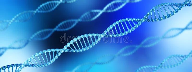 脱氧核糖核酸螺旋 染色体 库存例证