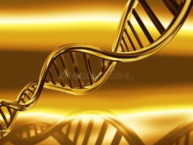 脱氧核糖核酸金黄子线 向量例证