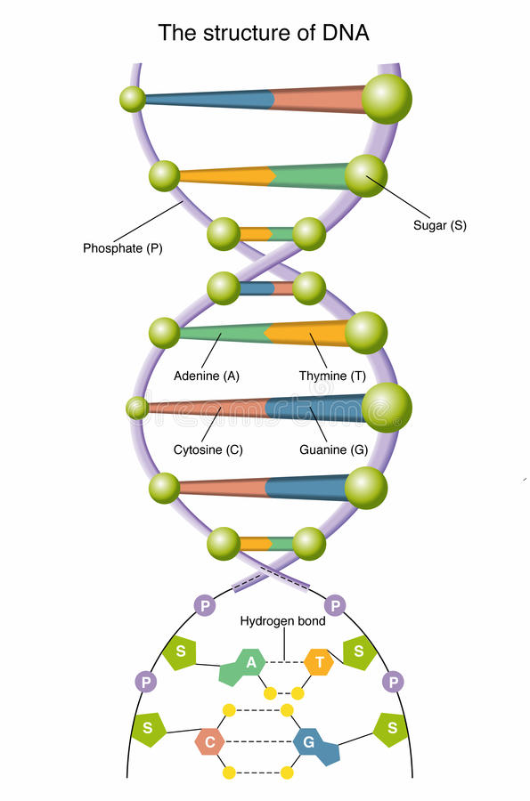 脱氧核糖核酸 库存例证