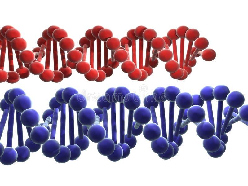 Download 脱氧核糖核酸 库存例证. 插画 包括有 遗传, 空白, 分子, 染色体, 科学, 红色, 背包, 子线, 医疗 - 65355