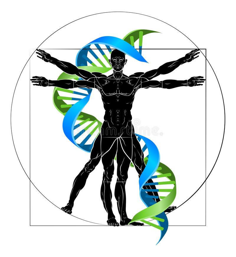 脱氧核糖核酸Vitruvian人 皇族释放例证