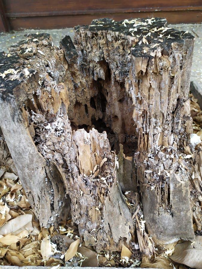 腐朽的树桩 库存照片