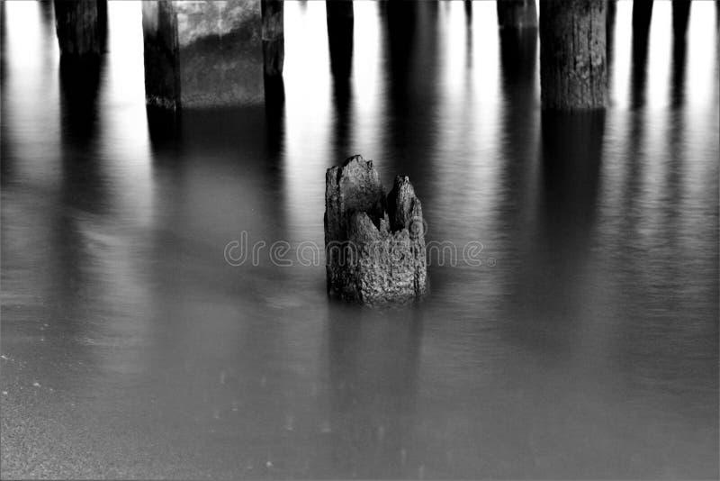 腐烂的岗位在水中 免版税图库摄影