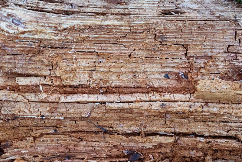 腐烂的木头 E 森林,自然 库存照片