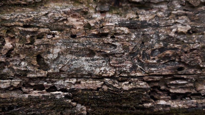 腐烂的木树纹理 免版税库存照片
