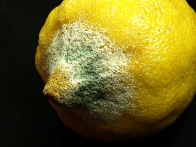 腐烂的柠檬 免版税库存照片
