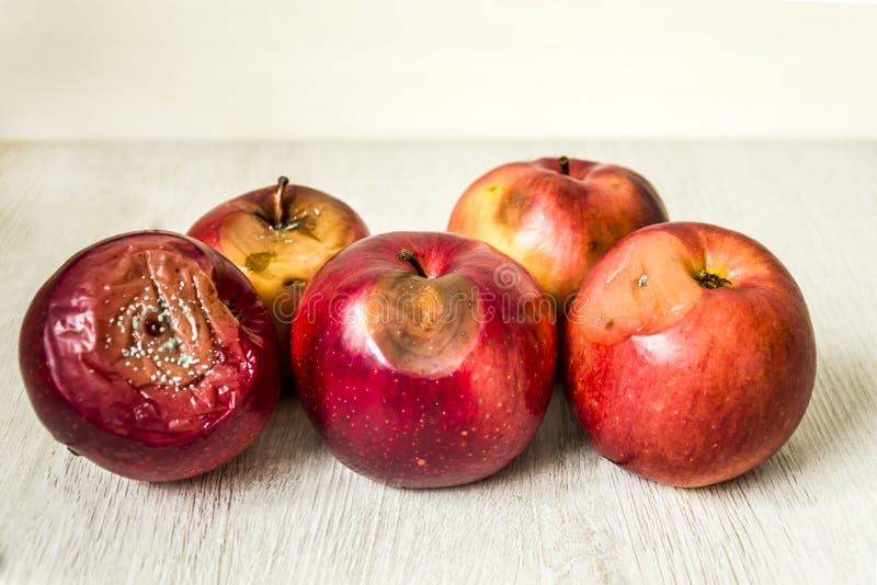 腐烂的红色苹果 库存例证