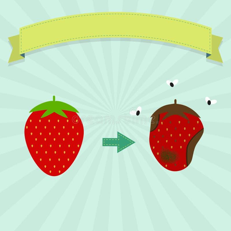 腐烂的草莓 皇族释放例证