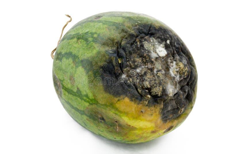 腐烂的西瓜。 免版税库存图片