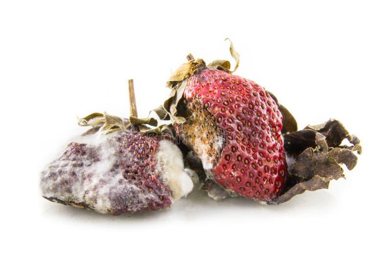 腐烂的strawberrys 免版税库存照片