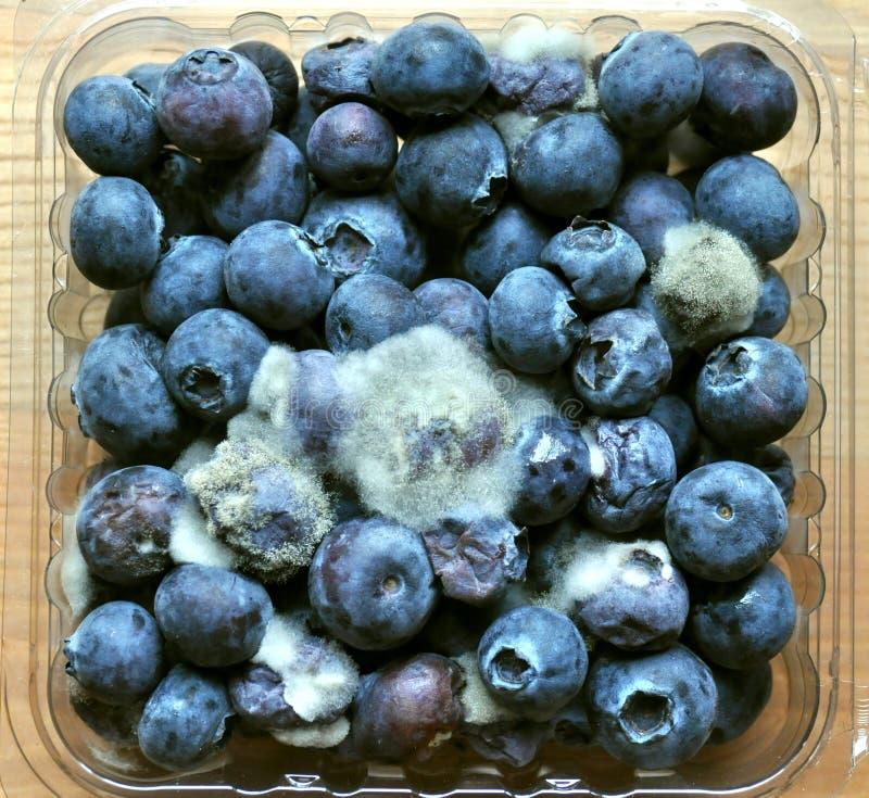 腐烂,发霉的蓝莓果子 免版税库存照片
