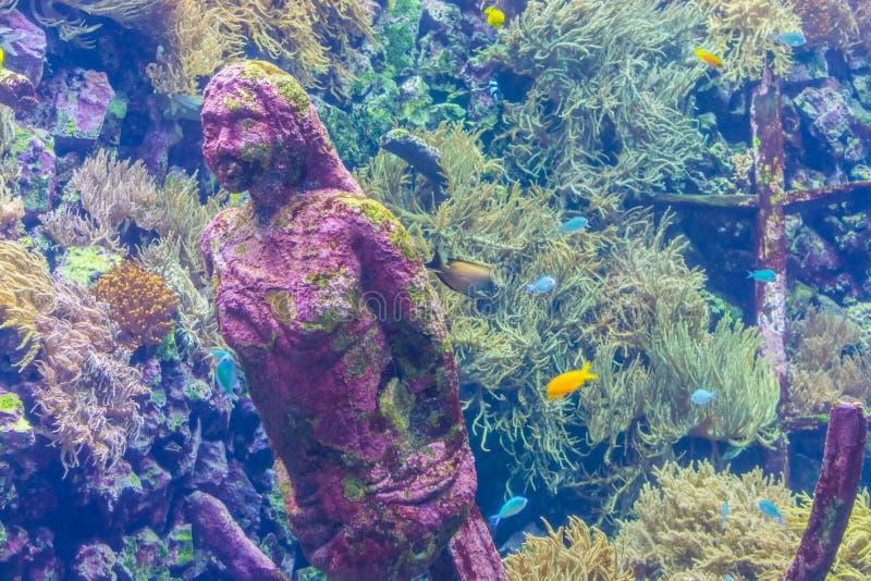 腐蚀的石美人鱼雕象在水面下,水族馆装饰,海洋生物背景 免版税库存图片