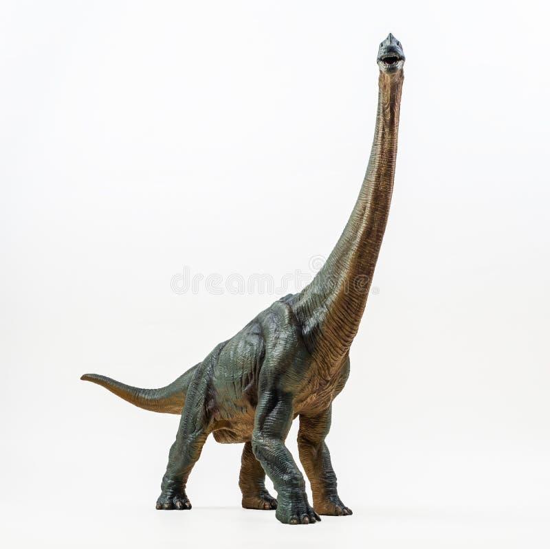 腕龙,在白色背景的恐龙 库存照片