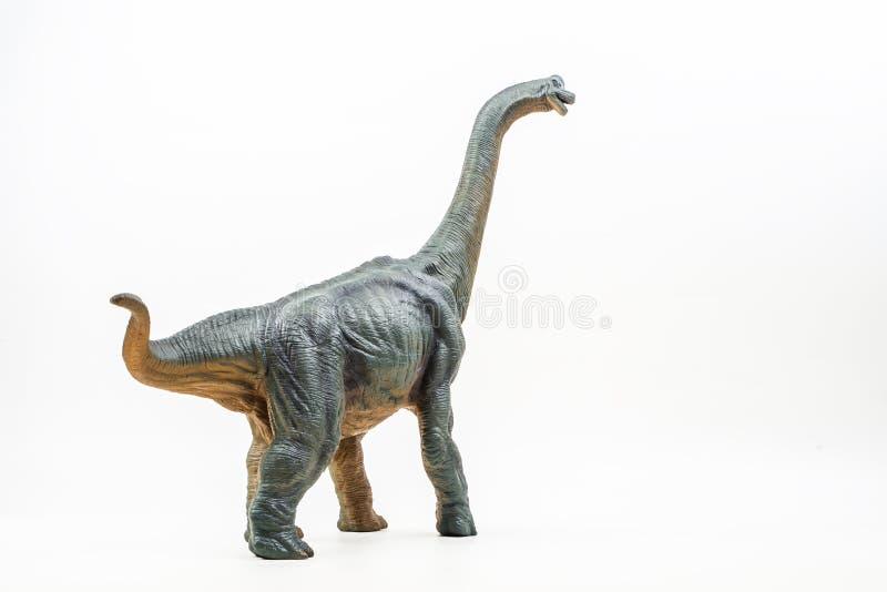 腕龙,在白色背景的恐龙 库存图片