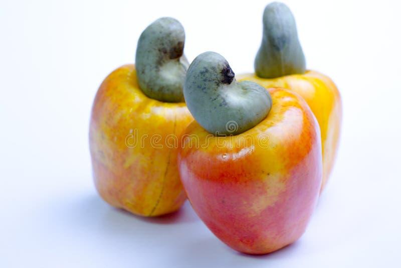 腰果是一个热带水果 免版税库存照片