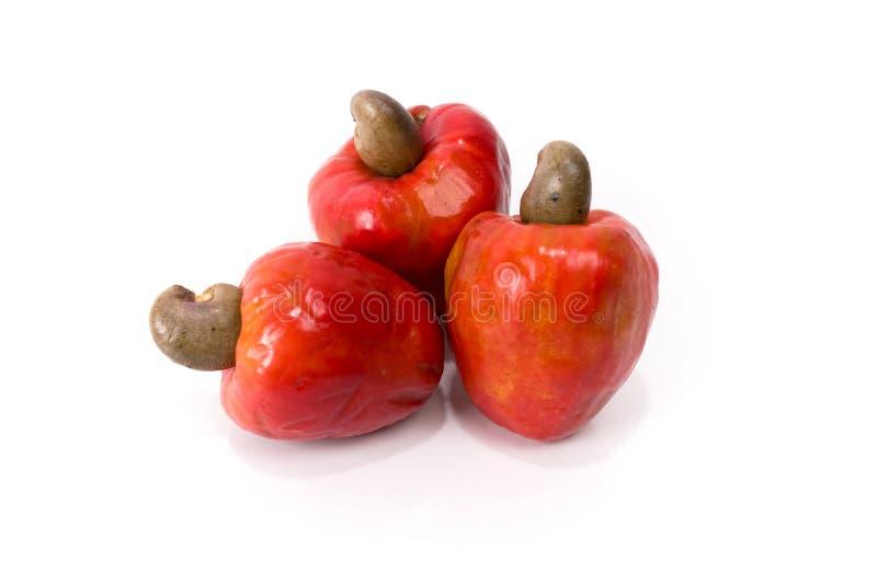 腰果果子 免版税库存图片