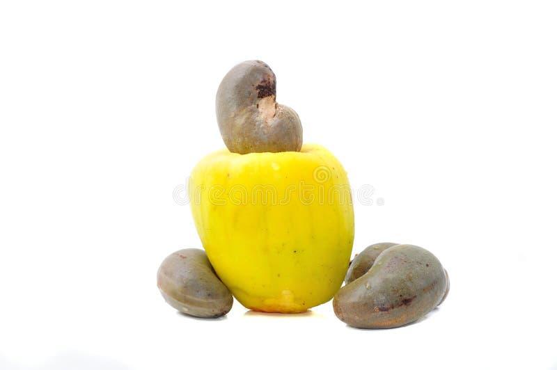 腰果果子 库存照片