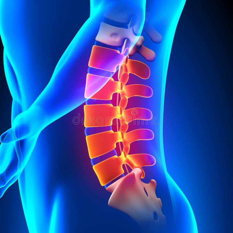 腰脊柱解剖学痛苦概念 向量例证