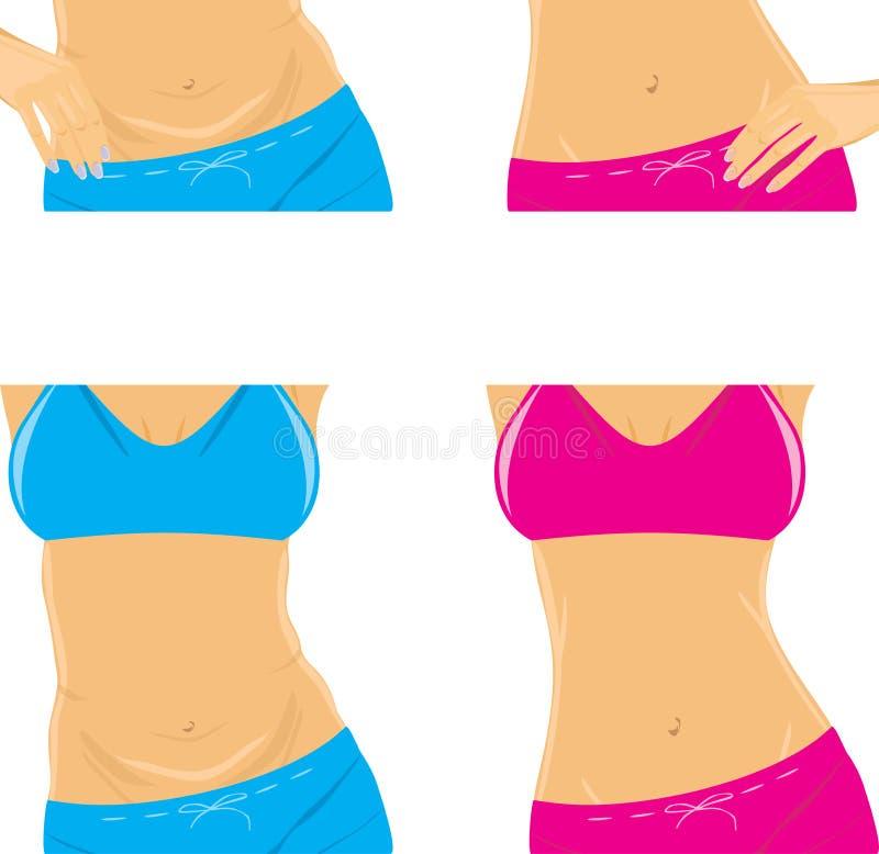 腹部和亭亭玉立的腰部。女性身体零件 库存例证