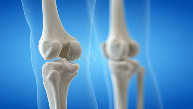 膝盖骨头 向量例证