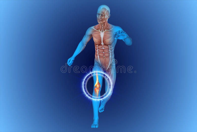 膝盖,解剖学,骨头 库存例证